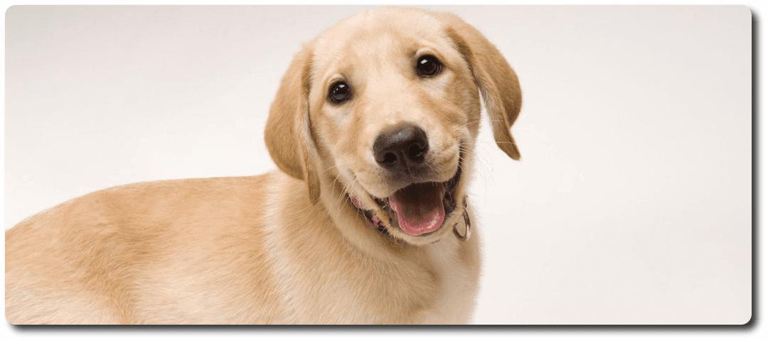 Educar En El Respeto A Los Animales Vota Tu Profesor